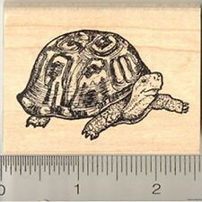 Box Turtle Rubber Stamp WM J6007 Crescent Turtle, Tortoise