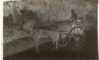 Imperial Photo Glass Plate Negative Village Butcher with Horse and Cart c1890