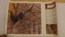 Vtg Craftaid Doodle Page Mother Nature's Wildlife Scene Series 11-B/8 Gene Nolan