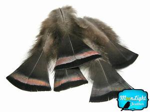 20 Pieces- Bronze Black Wild Turkey Flats Feathers