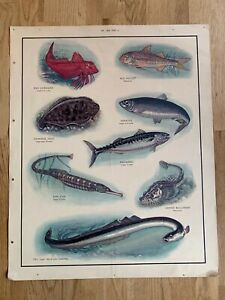 Vintage Original MacMillan's Nature Poster Sea Fish Mackerel Herring Eel Mullet