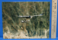 Mark Lewer Flying Hawk Photograph Picture Printed  Metal Wall Art  Made in  USA