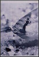 YZ3136 Tipo di Pesce Marino - 1980 Fotografia d'epoca - Vintage photo