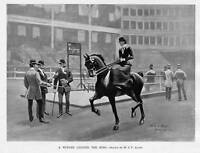 NEW YORK HORSE SHOW, FOUR IN HAND, STAGE-COACH, JUDGING