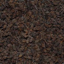 0,75kg/750g Conos de Aliso , glutinosa de Alnus , negro Alder Conos, Aliso Negro
