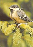 B98490 bird oiseau  animals animaux