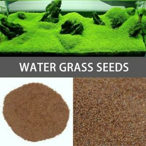 Fish Tank Aquarium Plant Grass Seeds 8G - EASY GROW BEGINNER PLANT