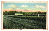 Mid-1900s Clearfield State Forest Nursery near Clearfield, PA Postcard