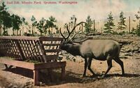 Vintage Postcard 1910's Bull Elk Feeding Manito Park Spokane WA Washington