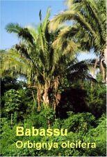 ***Babassuöl, kbA, Babassu (Orbignya oleifera) 200ml, Brasilien, b. trock. Haut!