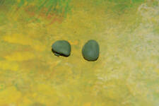 DaBro WWII Amerikaner Briten Engländer Deutsche Barett 2 Beret grün green Timpo