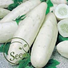 Seeds White Cucumber Cucumis Sativus Vegetable Fruit Home Garden Plant 100 Pcs