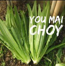 RARE✿ 2017 NEW! You Mai Choy /Yau Mak Choi/ Chinese Lettuce Seeds 50+ ●Tasty