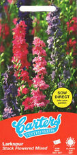 Larkspur (Delphinium) Stock Flowered 160 Flower Seeds/Borders & drying 2022 SALE