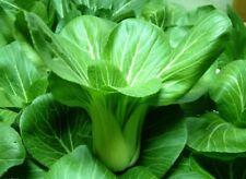 Orgánica Oriental Vegetal-Ching-Chiang Bebé col china etc barbilla Kang Choy - 300 semillas