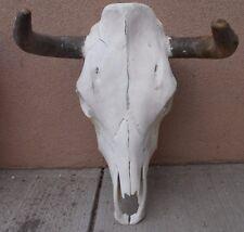 """16"""" STEER SKULL HORN LONGHORN cow bull horns CSK9"""