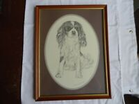 A Framed Vintage King Charles Pencil Drawing Print By Pollyanna Pickering.