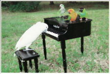 Postcard COCKATOO PLAYING PIANO for Quaker Parrot and Conures