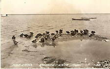 RPPC Houghton Lake MI WILD DUCKS Shoreline BOATS 1952