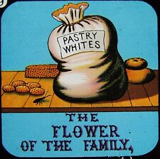 Glass Magic Lantern Slide THE FLOWER OF THE FAMILY C1890 VICTORIAN COMIC CARTOON