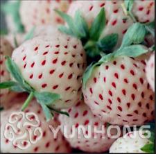 Pineberry Balcony Bonsai 500 Pcs Seeds Potted Garden Pineberry Berries White NEW