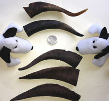 5 GOAT HORNS. LARGE 150-200mm EXTRA THICK. Dental Chew / Treat 4 Pet Dog's Teeth