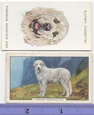Pyrenean Mountain Dog 2 Different Vintage Ad Trade Cards #3 Canine Pet