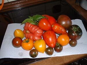 "15  Tomatensamen "" ALTE SORTEN "" Mischung  Samen Saatgut Sämereien Tomaten"