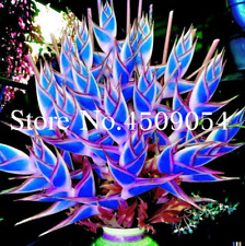 100 Pcs Seeds Rare Heliconia Plants Cosmetic Vegetables Bonsai Tree Garden 2019