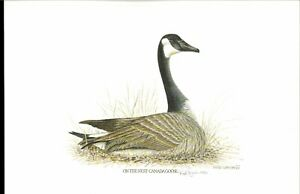 ILLINOIS 1977 #3 DUCK STAMP PRINT by Richard Lynch NEVER FRAMED W/stamp Reg $600