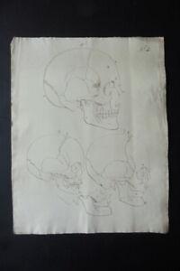 FLEMISH SCHOOL EARLY 19thC - ANATOMICAL STUDY - SKULLS - INK DRAWING