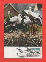 FDC 1973 - Nido De Cigüeñas Blanco (K395)