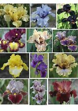 MEDIAN BEARDED IRIS - Collection of 5 different colours and patterns. Lovely!