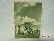 alte AK Ansichtskarte Postkarte Aus dem Bayrischen Wald