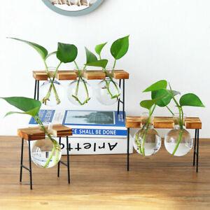 Glass Desktop Planter Bulb Vase Wooden Stand Hydroponic Plant Container Decor