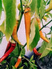 Milder Peperoni 75 Samen (3Packungen kaufen eine gratis dazu)