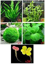Five Types of Live Aquarium Plants - Buy2Get1Free! hairgrass Marimo moss lettuce