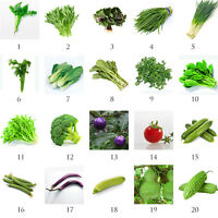 Decor Non-Gmo Heirloom Garden Vegetable Seed Seeds Bank Survival Organic Plant