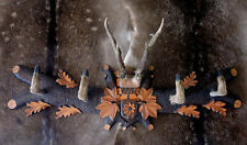Appendiabiti 92x26 legno inciso Corna zampe CAPRIOLO caccia roe deer taxidermy