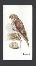LAMBERT & BUTLER - BIRDS AND EGGS - #38 BUZZARD