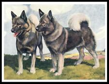 Norwegian Elkhound Two Dogs Lovely Vintage Style Dog Art Print Poster
