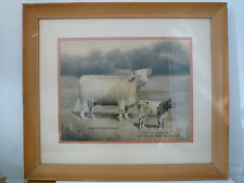 1905 Lewis Clark Exhibition MO Wash Drawing Hamptons Queen of Beauty Cow Steer