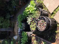 second hand pots hydroponic 40cm