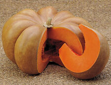 Musquee De Provence Pumpkin | French Heirloom | Preferred by Chef's | 15 Seeds