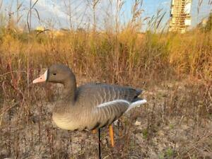 Goose decoys Full Body Specklebellies Oscar Decoys