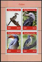 Chad 2019 MNH Calao Hornbills Hornbill 4v M/S Birds Stamps