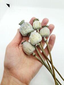 Poppy heads with stems dried papaver poppy head bunch red white black flower