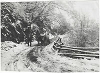 Waldweg bei Scharnitz, Orig.-Photo um 1910