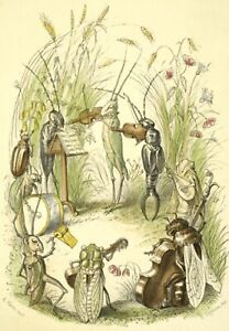 Modern Postcard Vintage Image - Insect Orchestra, fiddle, bass, lute, percussion