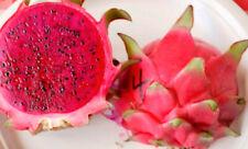 Lisa, Dark Red Flesh Dragon Fruit 2 new Cuttings 8
